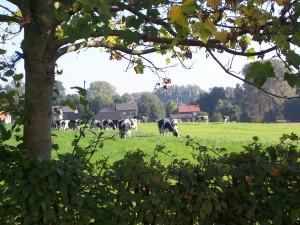 Groenendaal 13